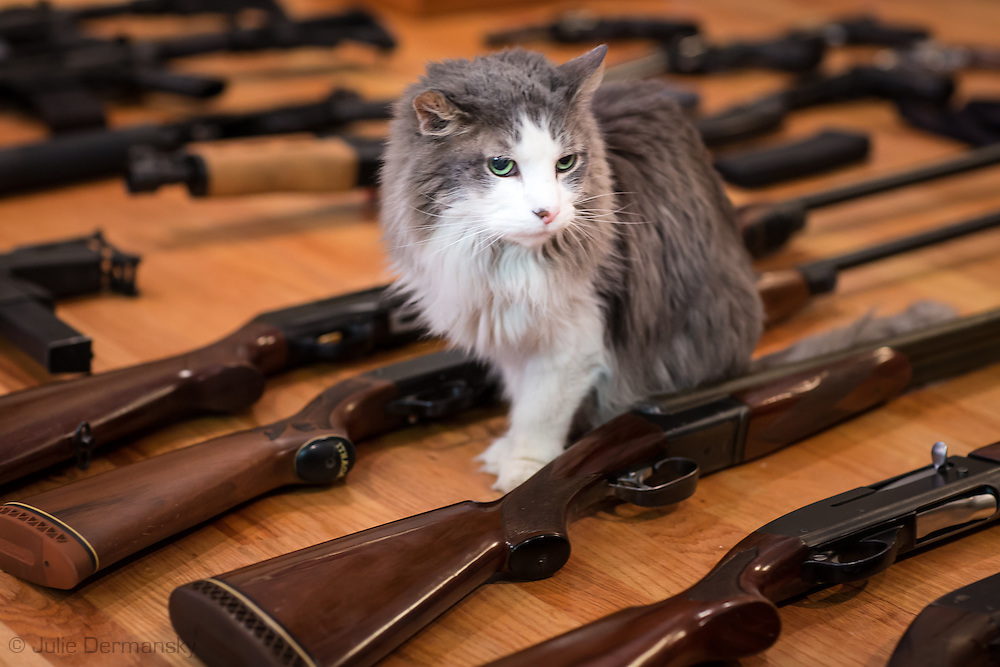 Cat walks through a gun collection in Kennar Louisiana,