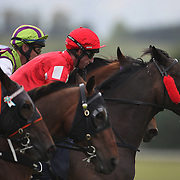Jockey Jamie Bullard, (red, centre) as horse and jockey's just from the starting gate during a day at the Races at the Gore Race Meeting, Gore, Southland, New Zealand. 18th December 2011. Photo Tim Clayton
