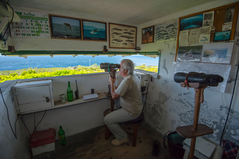 Antero Simas Soares, a former whaler, has worked as a vigia or whale spotter for roughly 19 years. From his tiny perch atop the mountain in Sao Mateus, he pinpoints via radio the whales' location for whale watching boats in Pico. Approximately 25 varieties of dolphins and whales are found in the Azores. No model release.