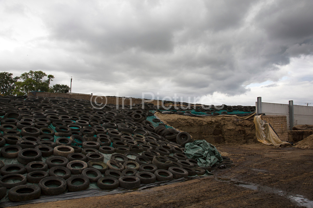 Silage heap. Silage is a form of conserved grass or other crops like maize that is made by farmers during the summer months when the grass supply is plentiful and not required for grazing. The grass / maize is cut, piled and covered in an air tight seal known as a clamp. Through this process it is fermented and stored, with the whole process known as ensilage, ensiling or silaging. Wildon Grange Dairy Farm, Coxwold, North Yorkshire, UK. Owned and run by the Banks family, dairy farming here is a scientific business, where nothing is left to chance. From the breeding, nutrition and health of their closed stock of Holstein Friesian cows, through to the end product, the team here work tirelessly, around to clock to ensure content and healthy animals, and excellent quality milk.