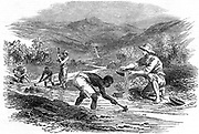 Panning for gold during the Californian Gold Rush of 1849. From 'The Illustrated London News' 6 January 1849. Wood engraving