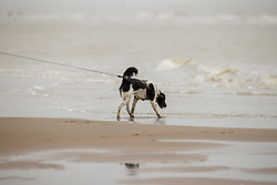 Strand wandeling, Roxy<br /> Oostduinkerke Bad 2020<br /> © Hippo Foto - Dirk Caremans<br /> 29/11/2020
