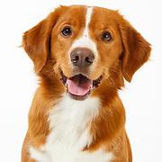 20130713 Karen Dogs Large