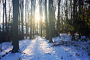 Cold winter landscape of early morning sun and blue light in snowy woodland landscape.
