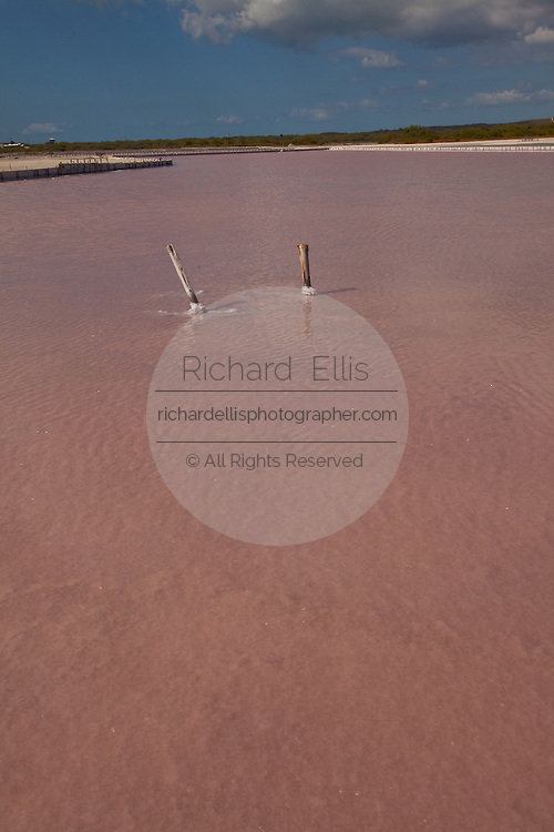 Salt flats at Cabo Rojo wildlife preserve Puerto Rico