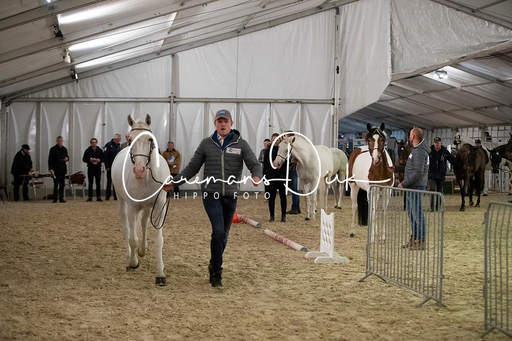Horse inspection driving horses<br /> Vlaanderens Kerstjumping - Memorial Eric Wauters - Mechelen 2018<br /> © Hippo Foto - Dirk Caremans<br /> 28/12/2018