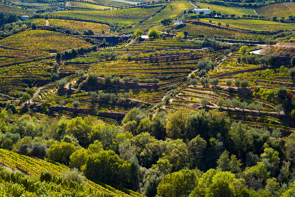 Vineyards on the green hill slopes and banks of the River Douro region north of Viseu in Portugal