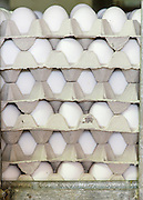 A pile of fresh eggs ready for shipping collected at an egg farm. Photographed in Israel