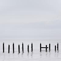 Happisburgh gull queue