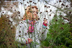 Examining the seedheads of Verbena bonariensis