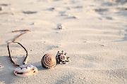 Seashells on the sand on a beach