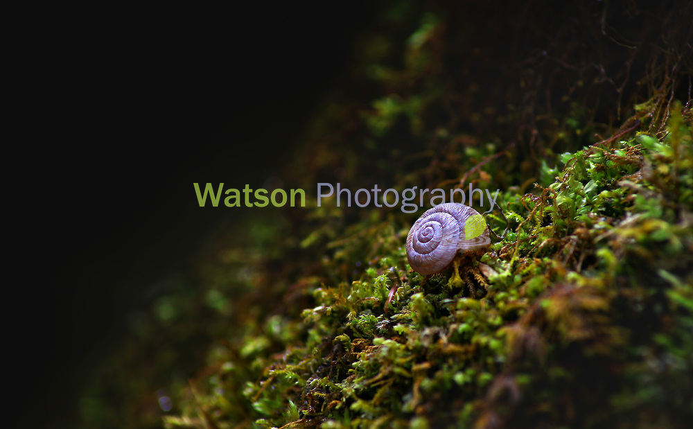 Snail of the Woods