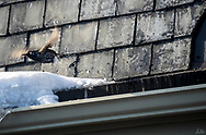 A small sparrow type bird launches into flight away from the side of a snow covered building with weathered shingles.