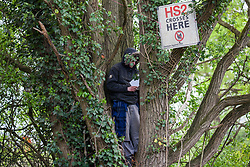 Harefield, UK. 27th April 2019. An environmental activist from Colne Valley Action stands in a tree to prevent its felling as part of work scheduled for this weekend for the HS2 project. The Colne Valley is an area of natural beauty and large areas of trees have been felled there for HS2 in recent weeks. Protesters based at the Harvil Road Wildlife Protection Camp are seeking to prevent further destruction.