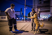 """30 NOVEMBER 2012 - BANGKOK, THAILAND:  Medics with the Ruamkatanyu Foundation play with a street dog between calls near the Ekamai BTS stop during a Friday night shift. The Ruamkatanyu Foundation was started more than 60 years ago as a charitable organisation that collected the dead and transported them to the nearest facility. Crews sometimes found that the person they had been called to collect wasn't dead, and they were called upon to provide emergency medical care. That's how the foundation medical and rescue service was started. The foundation has 7,000 volunteers nationwide and along with the larger Poh Teck Tung Foundation, is one of the two largest rescue services in the country. The volunteer crews were once dubbed Bangkok's """"Body Snatchers"""" but they do much more than that now.   PHOTO BY JACK KURTZ"""