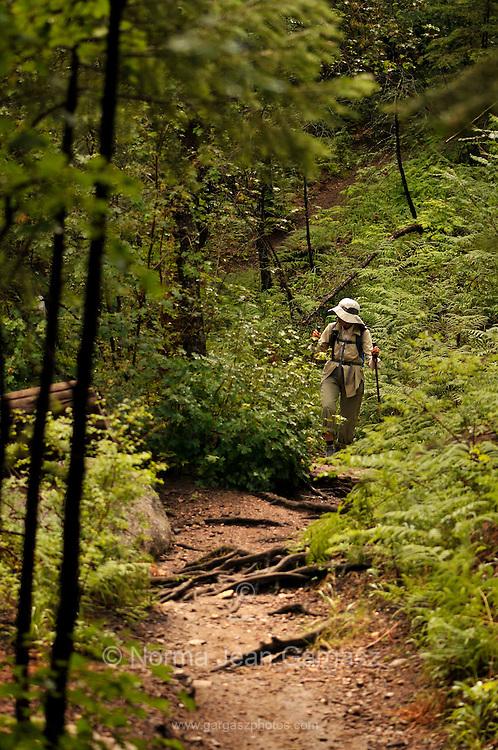 Hikers walk Marshall Gulch Trail on Mount Lemmon in the Pusch Ridge Wilderness Area, Santa Catalina Mountains, Coronado National Forest, Sonoran Desert, Summerhaven, Arizona, USA.