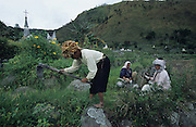 Women working in the fields. With Christian graveyard nearby. Batak agriculture, rice padis and vegetable crops, surrounding their traditional villages..Batak Indigenous Christian people living on Samosir Island and nearby Lake Toba in Indonesia. There are some 6 million Christian Batak in Indonesia, the world's largest Muslim country of 237 million people, which has more Muslims than any other in the world. Though it has a long history of religious tolerance, a small extremist fringe of Muslims have been more vocal and violent towards Christians in recent years. ..Batak religion is found among the Batak societies around Lake Toba in north Sumatra. It is ethnically diverse, syncretic, liable to change, and linked with village organisations and the monotheistic Indonesian culture. Toba Batak houses are boat-shaped with intricately carved gables and upsweeping roof ridges, and Karo Batak houses rise up in tiers. Both are built on piles and are derived from an ancient Dong-Son model. The gable ends of traditional houses, Rumah Bolon or Jabu, are richly decorated with the cosmic serpent Naga Padoha carved in wood or in mosaic, lizards, double spirals, female breasts, and the head of the singa, a monster with protruding eyes that is part human, part water buffalo, and part crocodile or lizard. The layout of the village symbolises the Batak cosmos. They cultivate irrigated rice and vegetables. Irrigated rice cultivation can support a large population, and the Toba and the Karo live in densely clustered villages, which are limited to around ten homes to save farming land. The kinship system is based on marriage alliances linking lineages of patrilineal clans called marga. In the 1820's Islam came to the southern Angkola and Mandailing homelands, and in the 1850's and 1860's Christianity arrived in the Angkola and Toba region with Dutch missionaries and the German Rheinische Mission Gesellschaft. The first German missionary caused the Dutch to stop Batak communal sacrificia