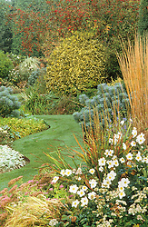 Autumn scene with mixed border of Calamagrostis x acutiflora 'Karl Foerster', Anemone x hybrida 'Honorine Jobert', Euphorbia characias and Malus 'Red Sentinel'.