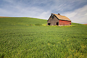 Old Barn in the Rolling HIlls of Palouse Washington