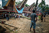 """Indonesia, Sulawesi, Tana Toraja. A coffin with a body of a deceased is being put in a lokkian.<br /> <br /> The most important ceremony in Tana Toraja is a funeral, because of the beliefs, that without proper funeral rites the soul of the deceased will be not only enter the second life, but also will bring a misfortune to the whole members of the family.<br /> Although Torajan funeral tradition can vary depending on a particular village, a typical ceremony lasts for 4 days. The first day is a procession, during which the deceased is visiting the whole village. Second day it's """"receiving"""", when all the guests arrive and are welcomed by the family members. The third day is the most bloody, because of the buffalo slaughtery (the Torajans believe that the animals should follow people in the second life). On the fourth day the body is taken to the grave."""