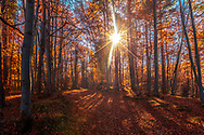 Sunny day in a colorful beach forest at autumn