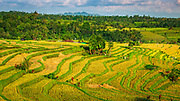 Jatiluwih Rice Terrace (UNESCO World Heritage Site), Bali, Indonesia