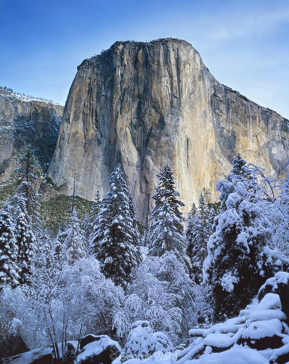 El Capitan Seenthrough Forest Clearing,Yosemite National Park, California