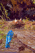 Plastic bags and other trash get caught and accumulate in trees and shrubs along the Los Angeles River at the Glendale Narrows. Urban runoff carries an assortment of trash and debris from catch basins where a network of pipes and open channels create a pathway to the Ocean at Long Beach. Los Angeles, California, USA