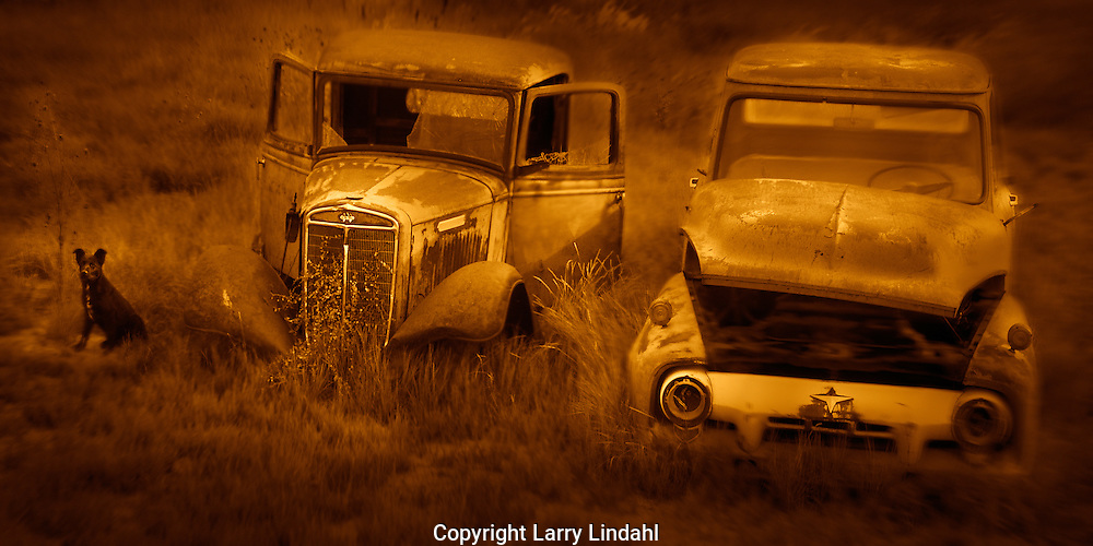 Two trucks and a dog Cortez CO