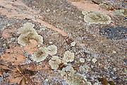Crustose lichens on rock<br />Kenora<br />Ontario<br />Canada