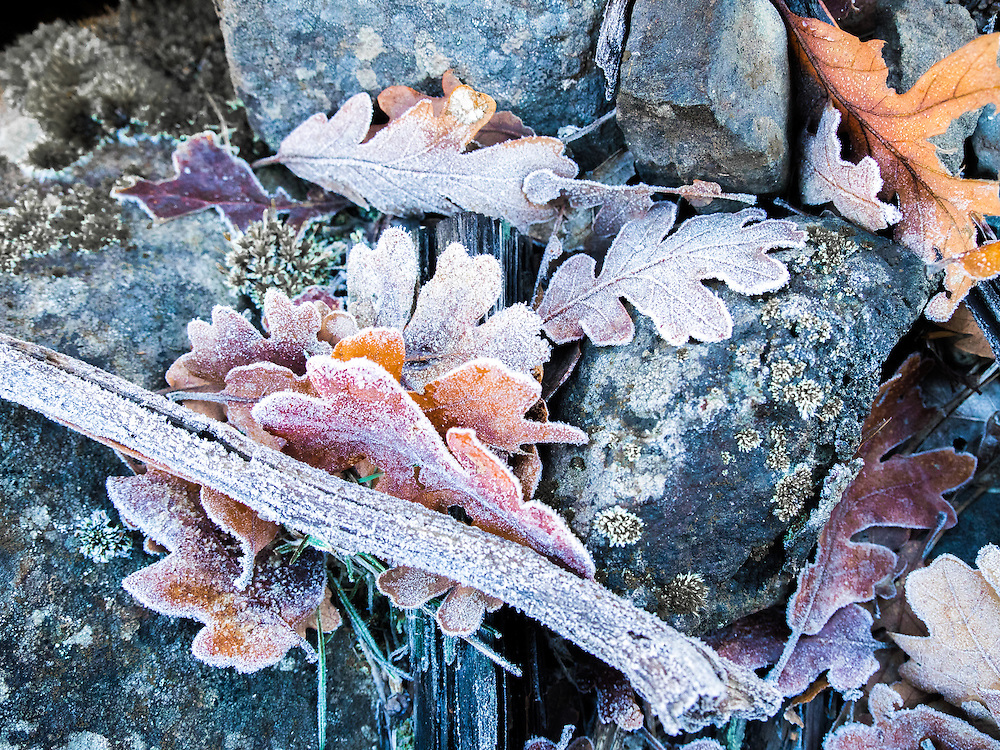 I came upon this scene while hiking on a frosty morning in Swale Canyon along the Klickitat River.