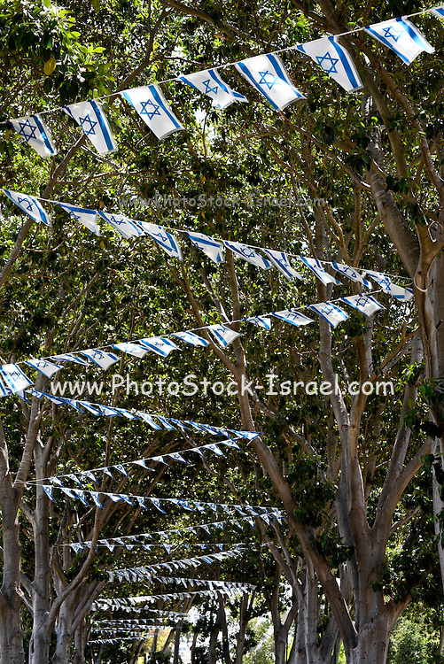Israeli flags strung up in the trees for Independence Day
