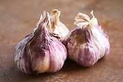 Three fresh Provence violet and white garlic on a rusty metal table. Clos des Iles Le Brusc Six Fours Cote d'Azur Var France