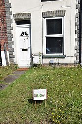 Front garden planted with wildflower seeds, Norwich UK 2020