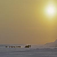 Dog sledding across Arctic Ocean from Severnaya Zemlya.