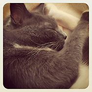 2018 JUNE 11 - A grey domestic shorthair cat takes a nap in, Seattle, WA, USA. Taken/edited with Instagram App for iPhone. By Richard Walker
