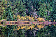 Fall foliage in Rolley Lake Provincial Park, Mission, British Columbia, Canada