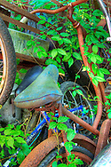 Bikes rusting in undergrowth