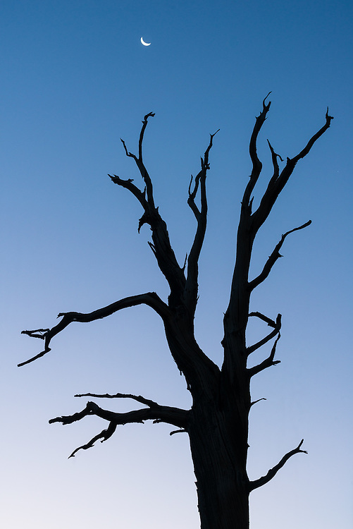 Bristlecone Pine, White Mountains, California