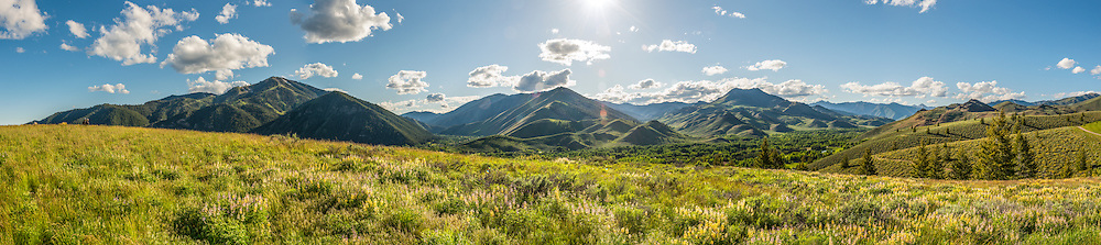 Panorama of spring wildflowers on the White Clouds Loop above Sun Valley Resort.  Licensing and Open Edition Prints