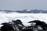 Alnes 20070116. En måse flyr over de store bølgene som slår inn over fjøresteinene ved Alnes i Giske kommune under stormen en vinterdag i januar 2007. <br /> <br /> A seagull is flying above the large waves wich is hitting the coastline of Alnes in Giske during a storm in january 2007. <br /> <br /> Foto: Svein Ove Ekornesvåg