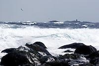 Alnes 20070116. En måse flyr over de store bølgene som slår inn over fjøresteinene ved Alnes i Giske kommune under stormen en vinterdag i januar 2007. <br /> <br /> A seagull is flying above the large waves wich is hitting the coastline of Alnes in Giske during a storm in january 2007. <br /> <br /> Foto: Svein Ove Ekornesvåg
