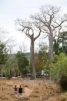 Laura & Rado approach the baobabs.