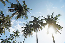 Low angle view of palm trees, Koh Lipe, Thailand