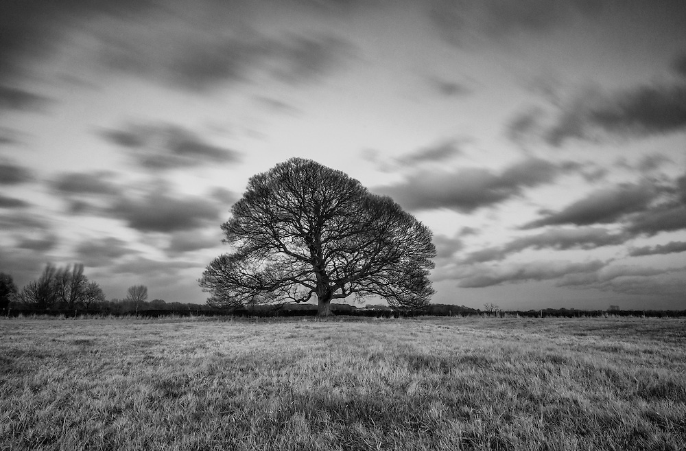 Lonely Tree in Leicestershire.