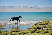 A black horse on the east shore of lake Song Köl, Kyrgyzstan