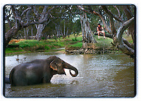ashtons circus: 971127: avoca: pic - Craig Sillitoe : elephant trainer Brazil with Abu in Avoca. melbourne photographers, commercial photographers, industrial photographers, corporate photographer, architectural photographers, This photograph can be used for non commercial uses with attribution. Credit: Craig Sillitoe Photography / http://www.csillitoe.com<br /> <br /> It is protected under the Creative Commons Attribution-NonCommercial-ShareAlike 4.0 International License. To view a copy of this license, visit http://creativecommons.org/licenses/by-nc-sa/4.0/. This photograph can be used for non commercial uses with attribution. Credit: Craig Sillitoe Photography / http://www.csillitoe.com<br /> <br /> It is protected under the Creative Commons Attribution-NonCommercial-ShareAlike 4.0 International License. To view a copy of this license, visit http://creativecommons.org/licenses/by-nc-sa/4.0/.