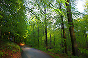"""Dreve des Tumuli in the Sonian Forest, Foret de Soignes, or Zoniënwoud, an 11,000 hectare woodland to the southeast of Brussels, providing a """"green lung"""" for the polluted, traffic choked city. The forest is currently in three jurisdictions, Brussels, Flanders and Wallonia, but EU involvement in 2013 will see development of plans to re-unify the forest, for the benefit of humans and wildlife."""