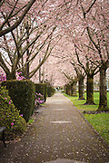 USA, Oregon, Salem, State Capitol State Park in early spring.