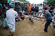 Vietnamese friends gather in group to watch a rooster fight. They're alert. Khanh Hoa area, Vietnam, Asia